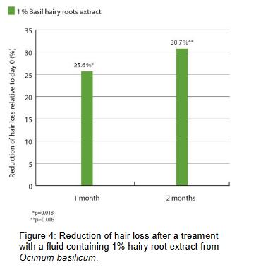 basilikum extrakt reduziert haarausfall