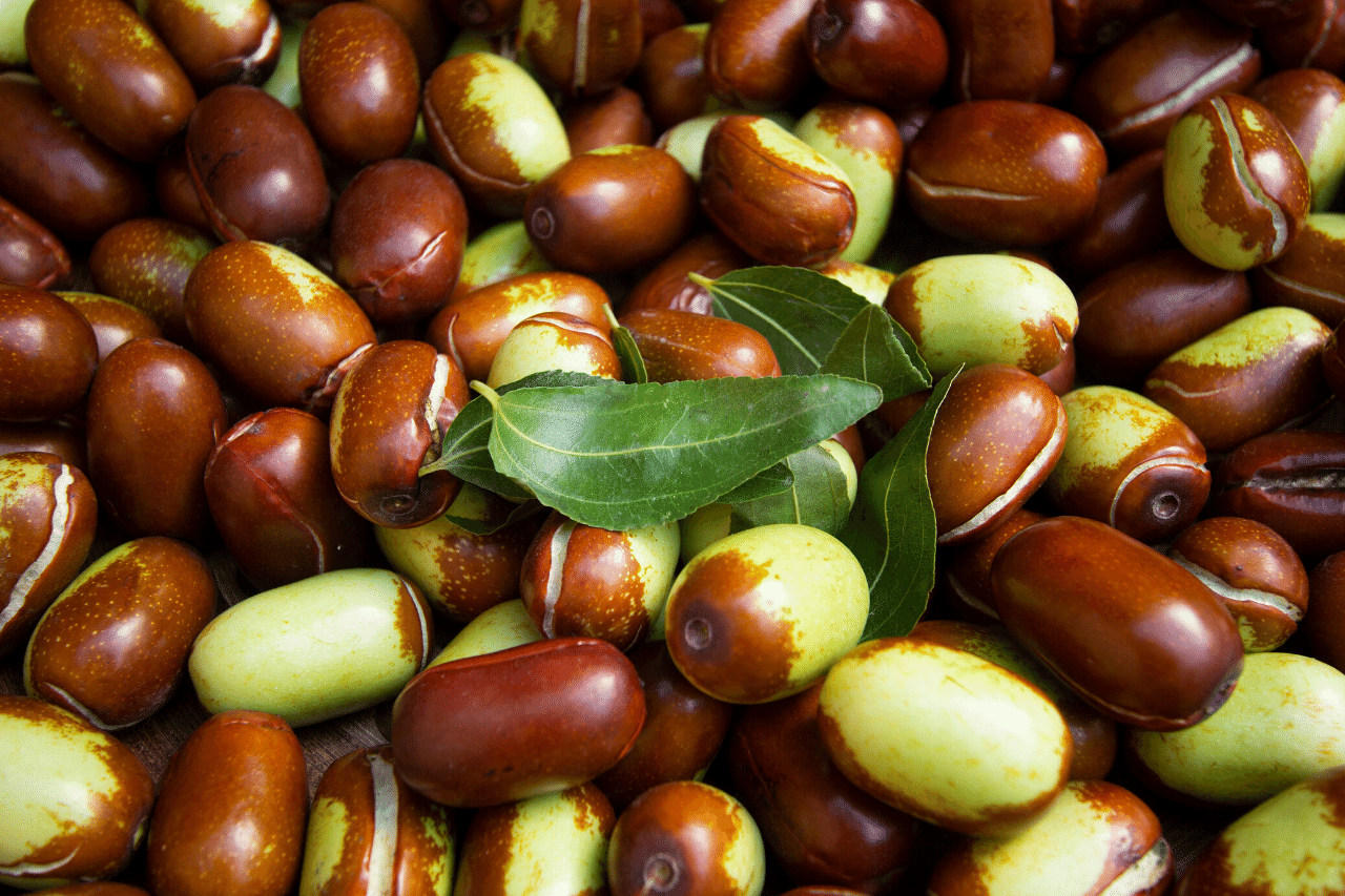 samen der jojobapflanze
