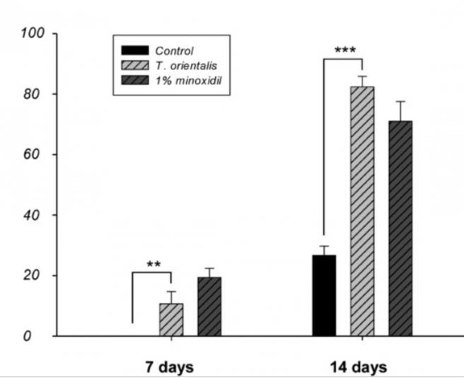 thuja vs minoxidil studie haarausfall